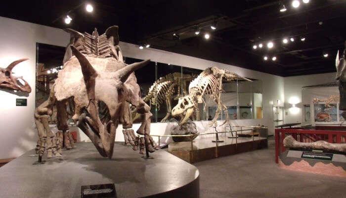 Arizona Museum Of Natural History In Arizona