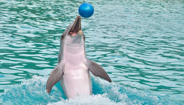 Dolphin Discovery