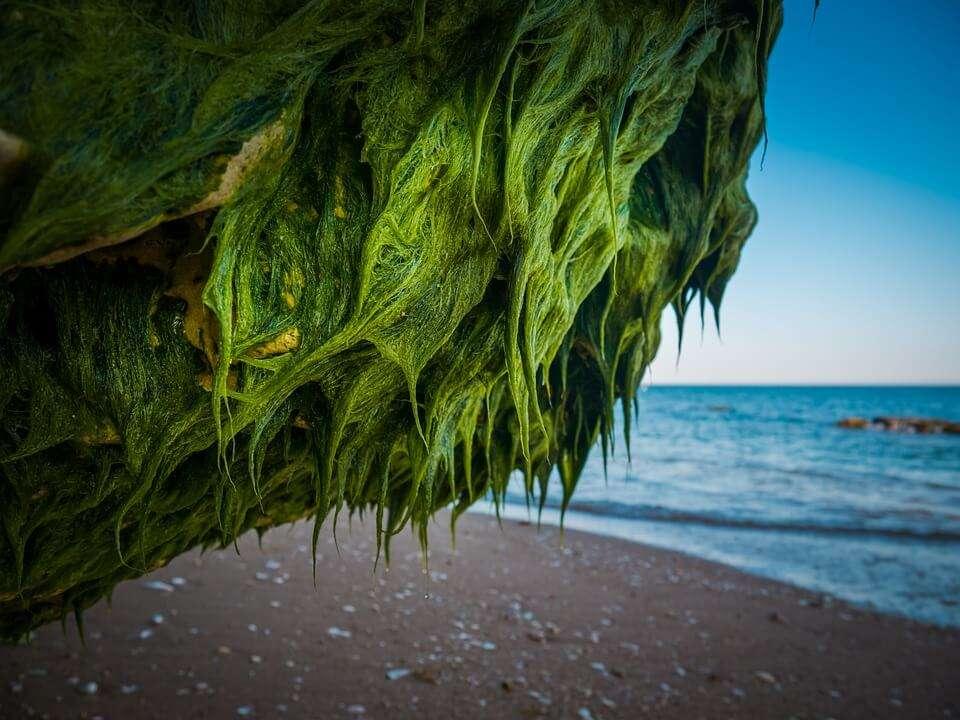 Nature Rock Sea Beach Seaweed Landscape Water