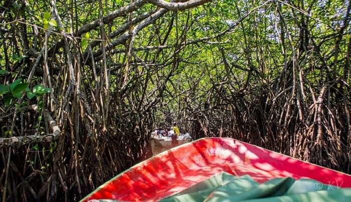 jungle safari ride in sri lanka
