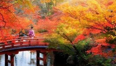 Kyoto in November