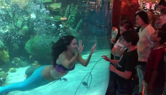 Mermaid Shows