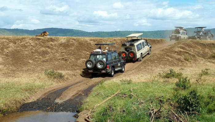 Jeeps in a National Park