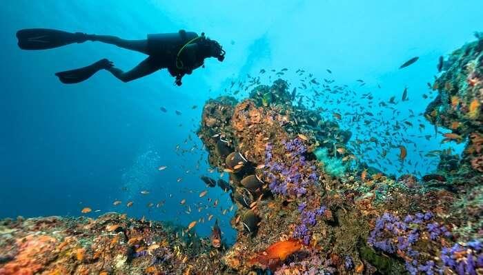 Scuba Diving In Tokyo