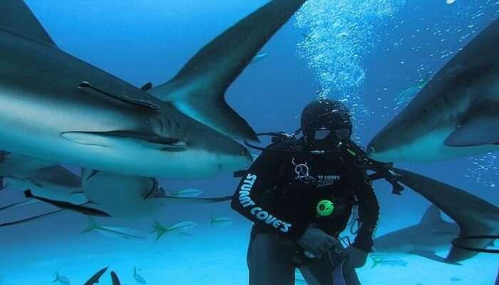 Stuart_Coves_Dive_Bahamas_