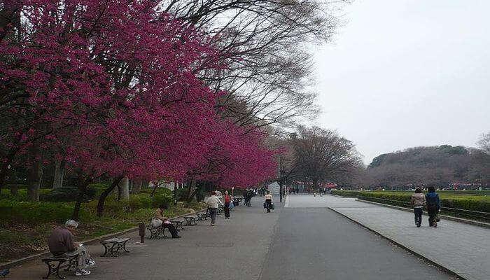 Ueno_Park_