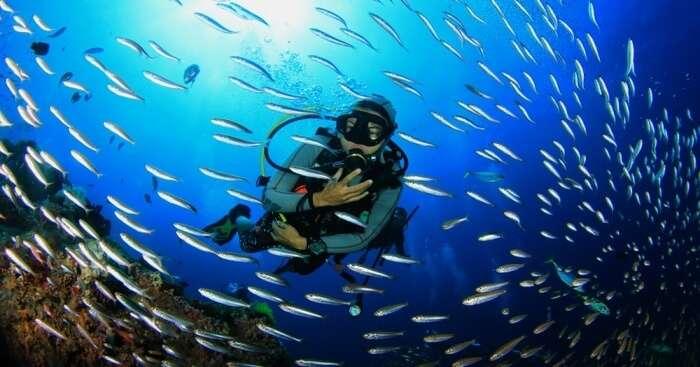 Koh Phi Phi Scuba Diving