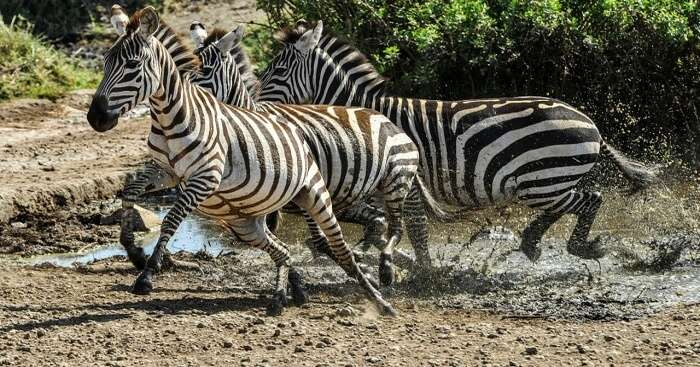 6 Astounding Zoos In Bali To Be Explore By Animal Enthusiasts