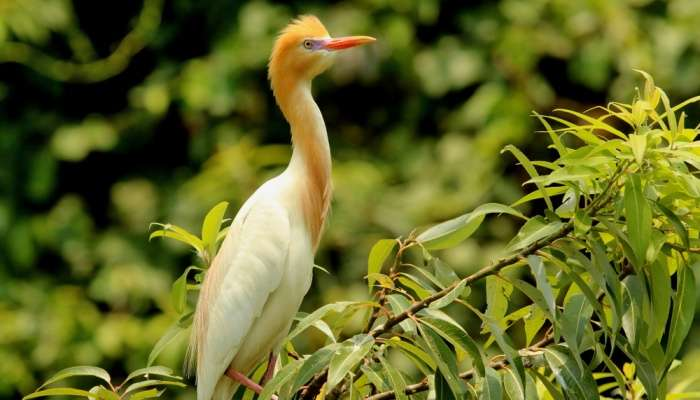 Pushpagiri Wildlife Sanctuary