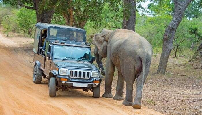 Adventure Activities In Karnataka