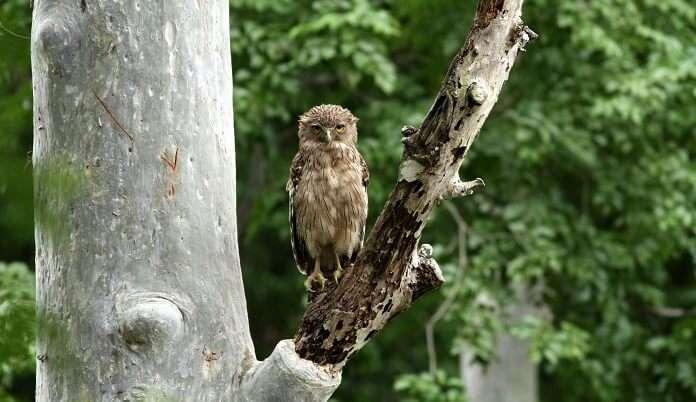 Chinnar Wildlife Sanctuary, Kerala