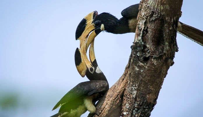 Dandeli Wildlife Sanctuary, Karnataka