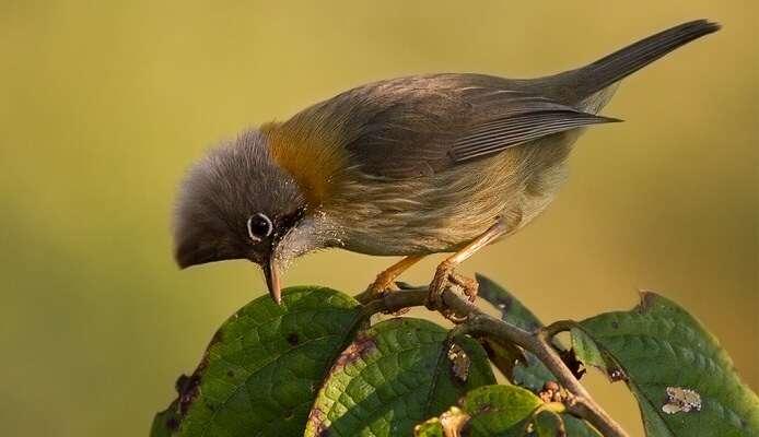 Eaglenest Wildlife Sanctuary, Arunachal Pradesh