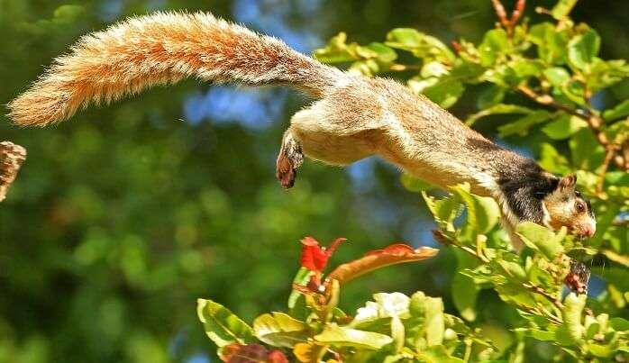 Grizzled Squirrel Wildlife Sanctuary, Tamil Nadu