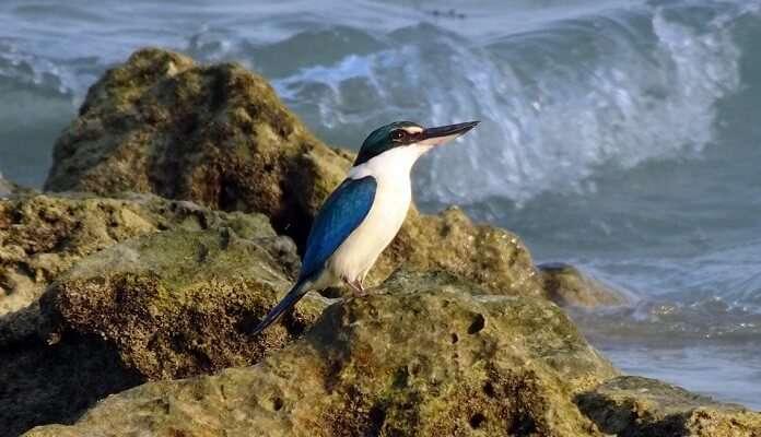 Interview Island Wildlife Sanctuary, Andaman
