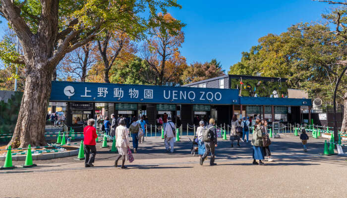 Japan Zoos cover