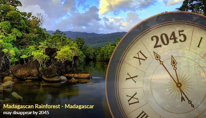 Madagascan Rainforest - Madagascar
