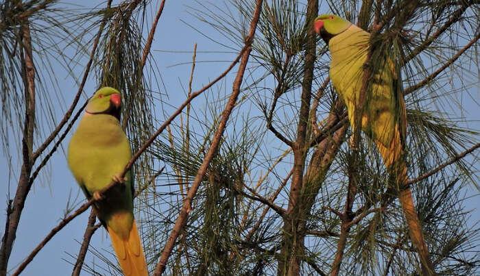 Pakshipathalam Bird Sanctuary