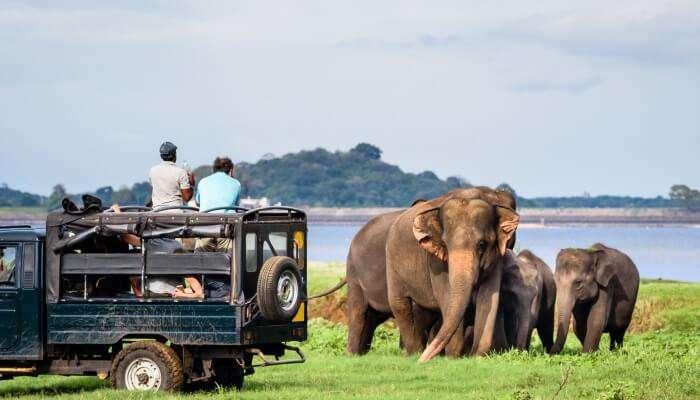 Pinnawala Sri Lanka