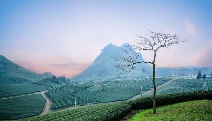 Tea And Spice Plantations