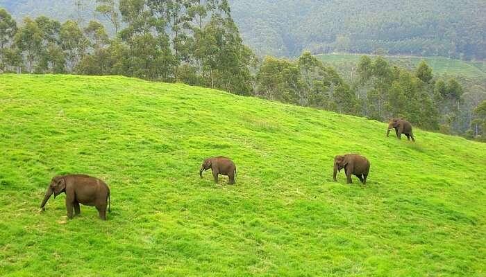 Ulipooni Wildlife Sanctuary