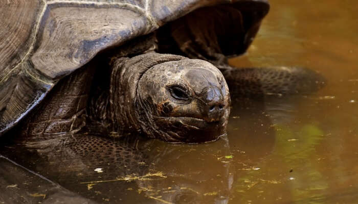 tortoise in a pond