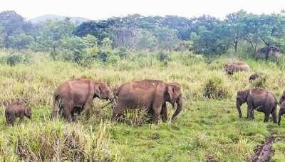 Hurulu Forest Reserve In Sri Lanka