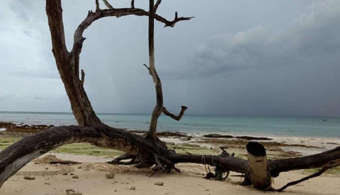 tree log on the beach