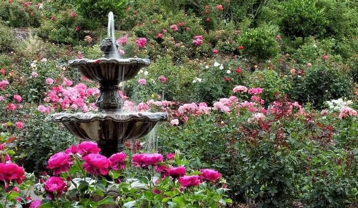 Nehru Rose Garden In Ludhiana