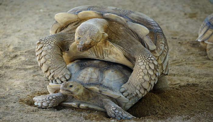 Turtle Breeding Center