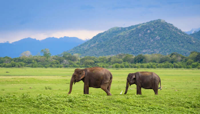 Best Things To Do In Gampaha With Kids