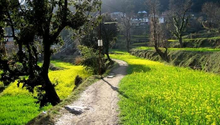 Dharamkot dharamshala