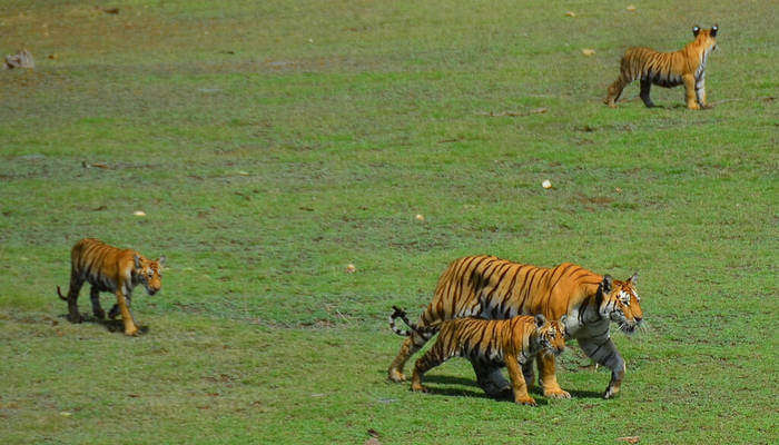 Pench National Park_22nd oct