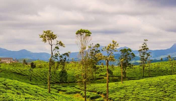 Valparai south india