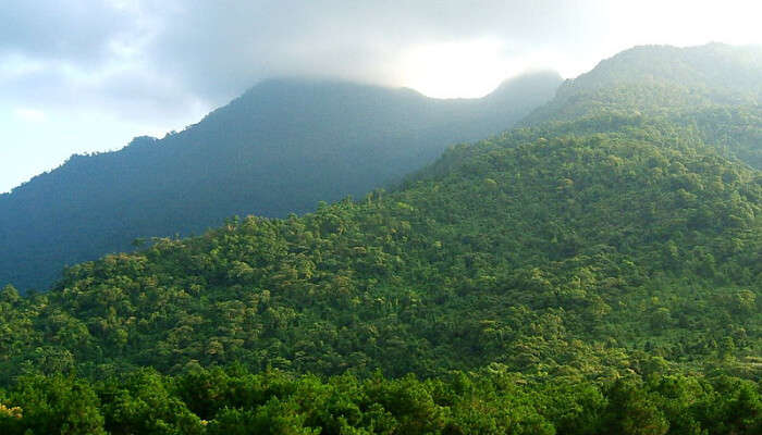 Forests over Mountains