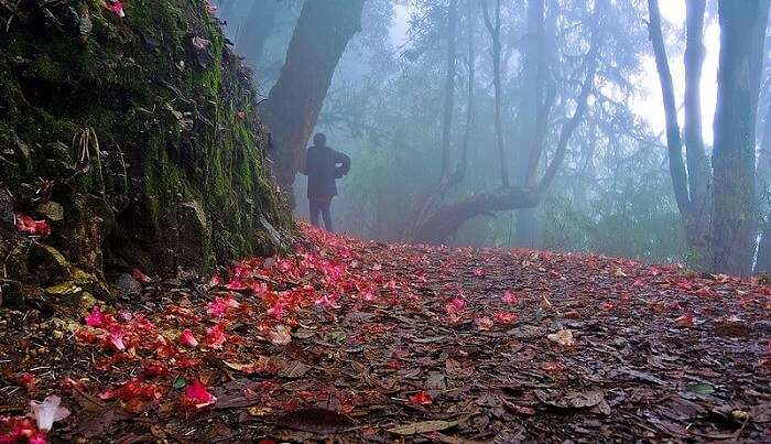 shingbo rhododendron sanctuary
