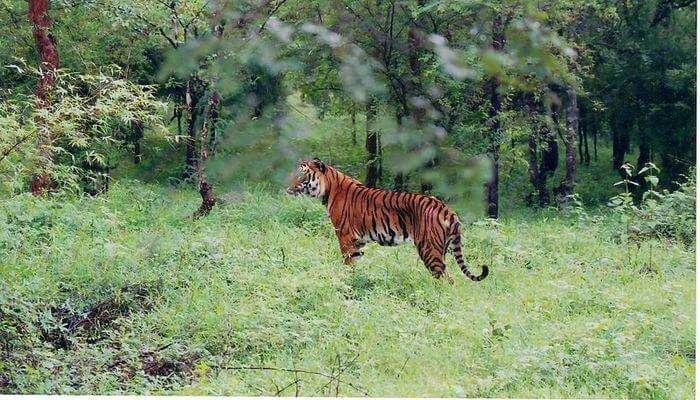 Amazing Wildlife Sanctuary