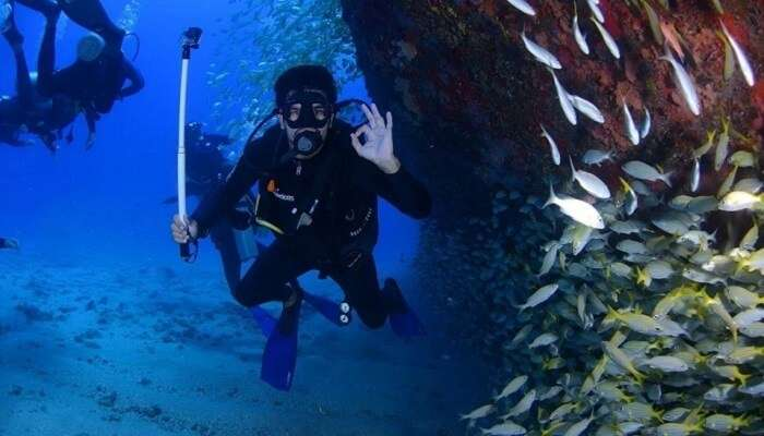 explore the fascinating underwater denizens