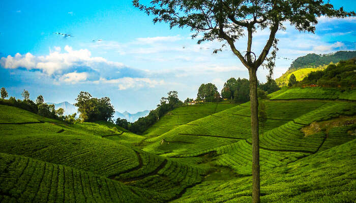 Beautiful view of grass land