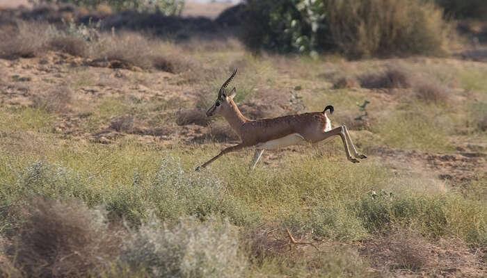 Animal running In Ground