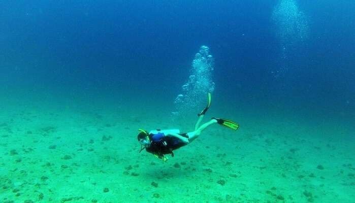 breathtaking life under the ocean