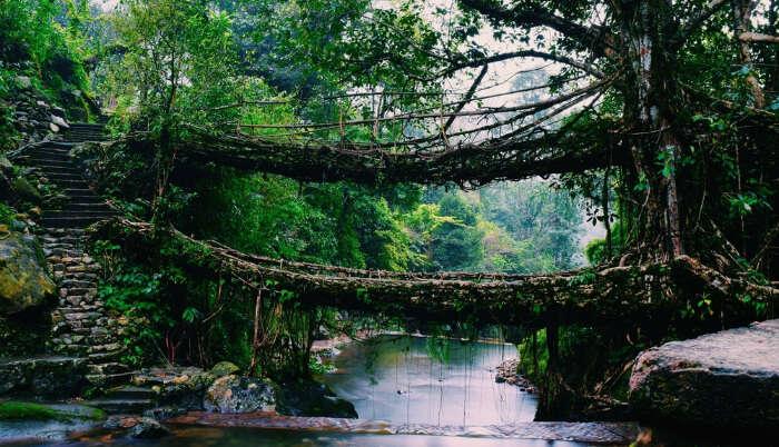 Root Bridge