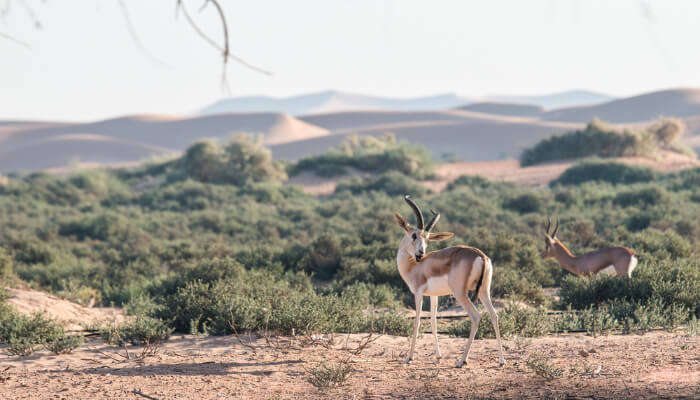 Dubai Wildlife cover