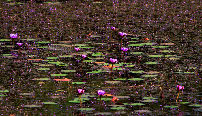 Beautiful flowers in Lake