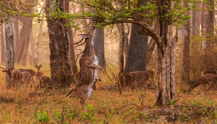 Gugamal National Park