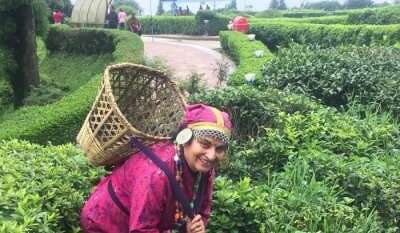 clicked pictures with tea plantations