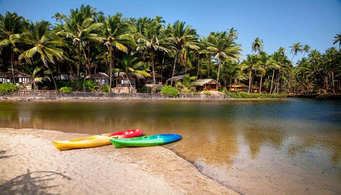 Kayak Through The Mangroves in Goa