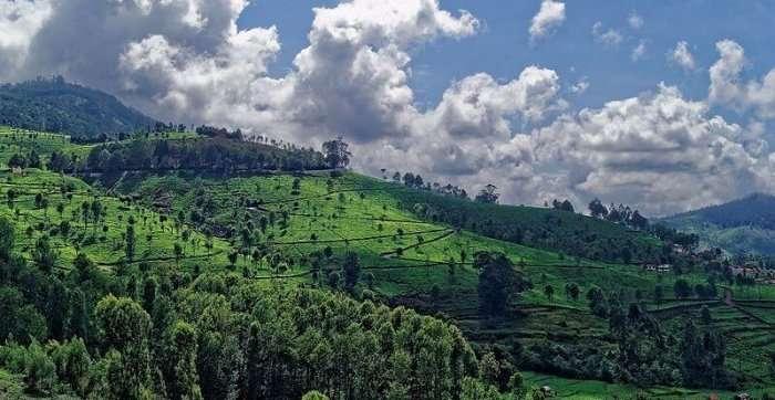 rolling green hills in kotagiri