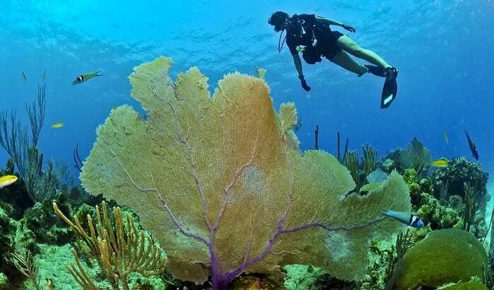 rocky underwater place