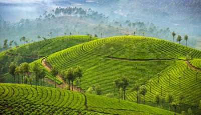 Munnar In December cover